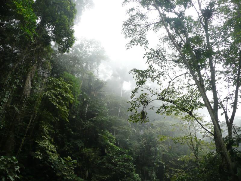 sarisarinama-venezuela