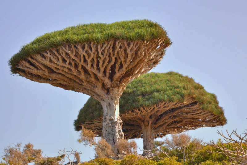 socotra-yemen