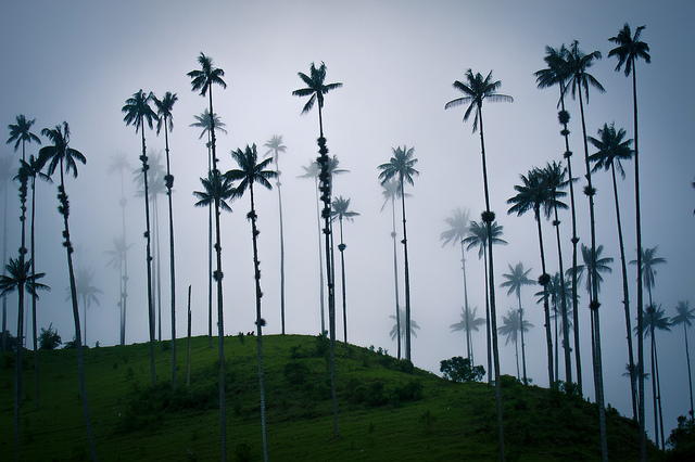 valle-del-cocora-colombia