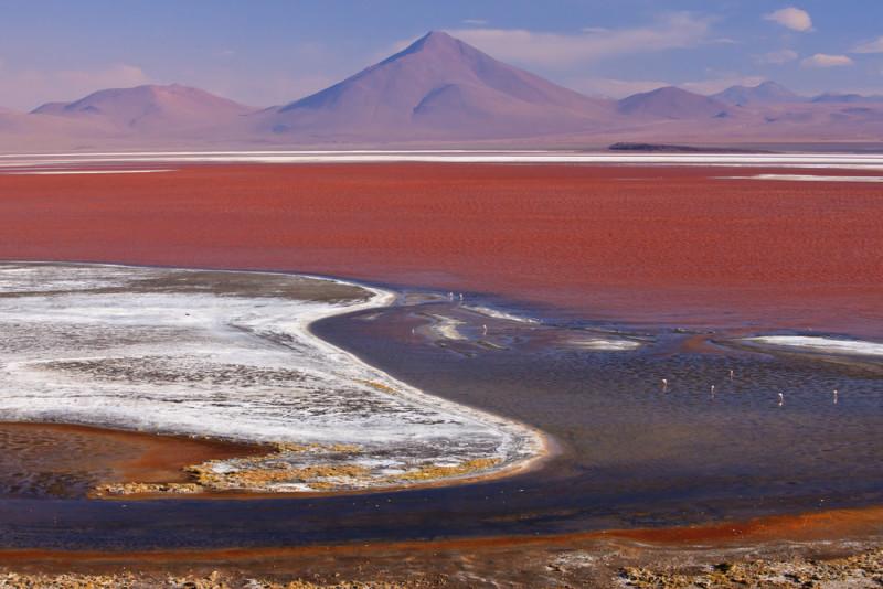 laguna-colorada-bolivia (3)