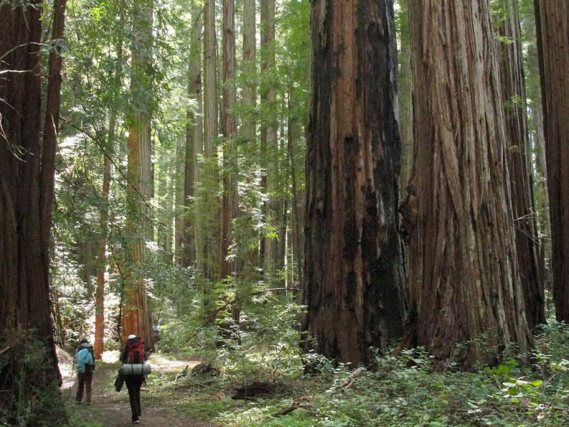 secuoyas-california