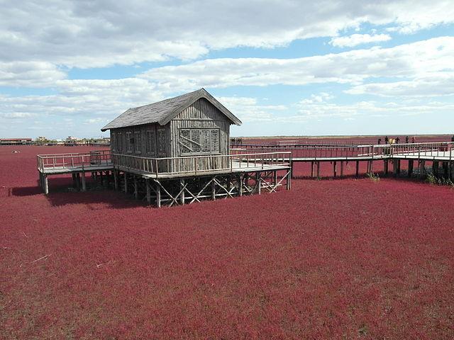 pajin-red-beach-china
