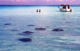 """Una """"ciudad"""" de rayas en un banco de arena y aguas cristalinas del Caribe (en las islas Cayman)"""