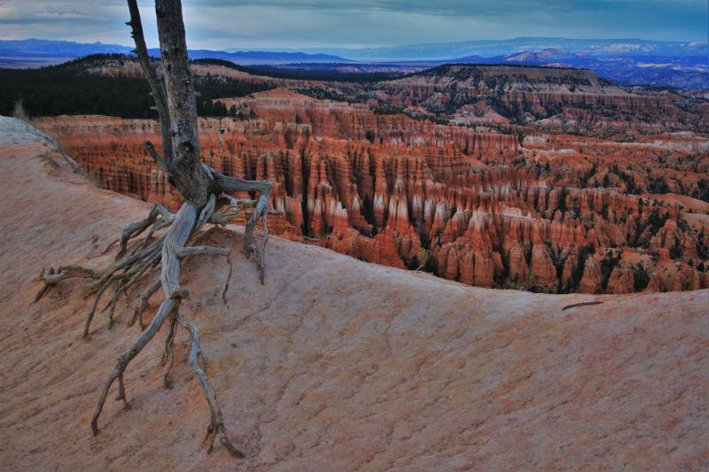 bryce-canyon-arboles-6