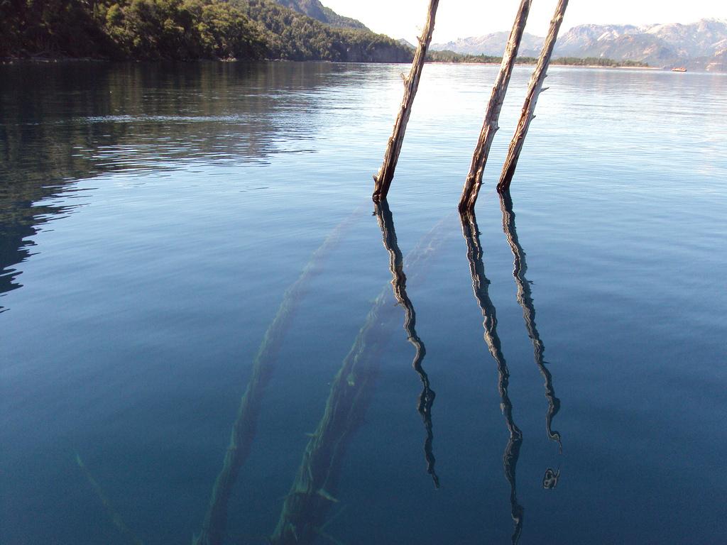 bosque-sumergido-lago-traful