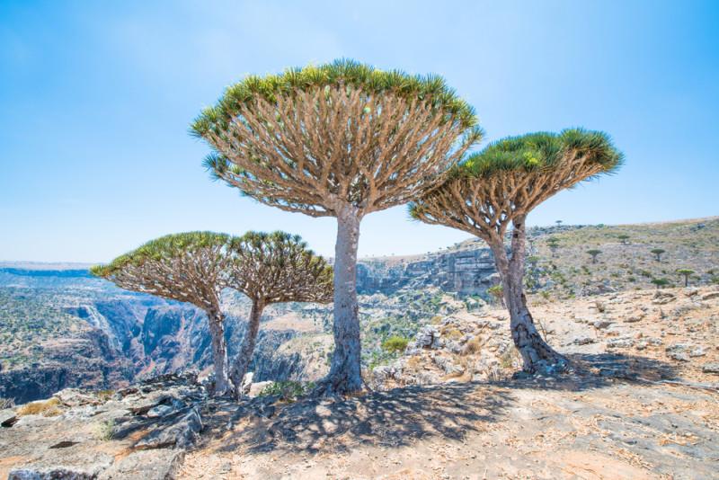 coqotra-yemen
