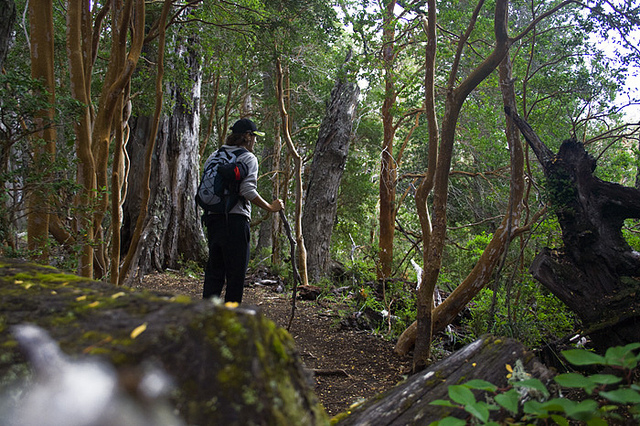 bosque-arrayanes