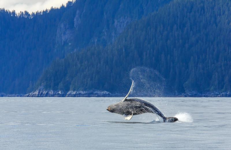 El Paraso Perdido De Kenai En Alaska 40 Fotos 101