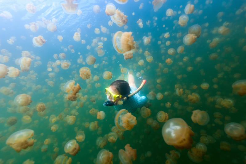 lago-medusas-palau