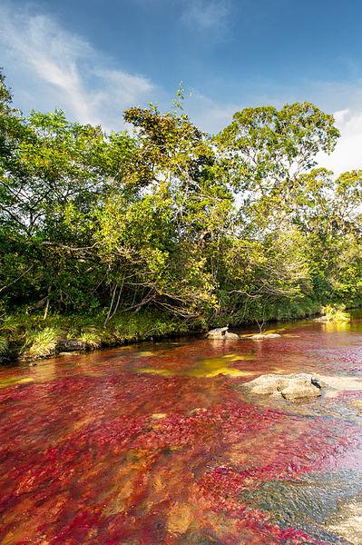 rio_Cano_Cristales_Colombia_2