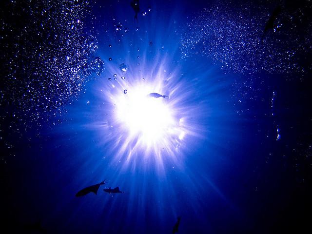 25 fotos de uno de los puntos de buceo más bonito del planeta (Parque Marino Bunaken, Indonesia) - 101 Lugares increíbles