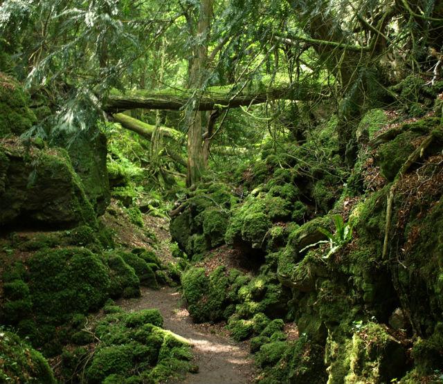 """Este es el bosque """"de cuento"""" que habría inspirado la Tierra Media de J.R.R. Tolkien (Puzzlewood, Inglaterra) - 101 Lugares increíbles"""