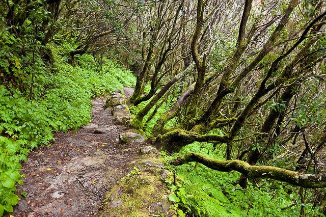 12 rincones curiosos de Islas Canarias que tal vez desconocías (Parte 2) - 101 Lugares increíbles