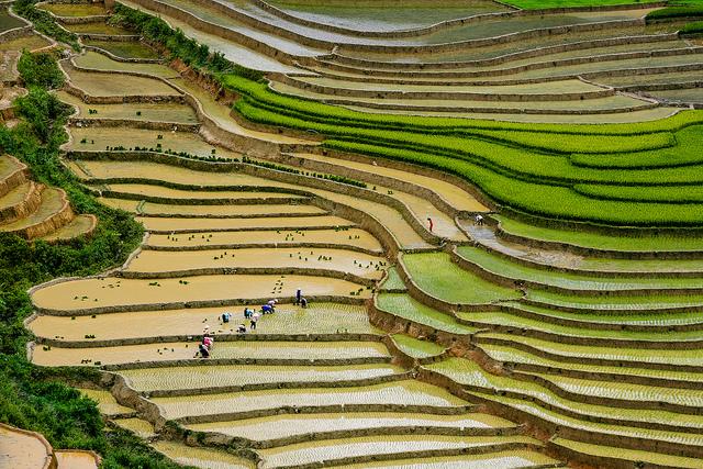 terrazas-arroz-mu-cang-chai-vietnam