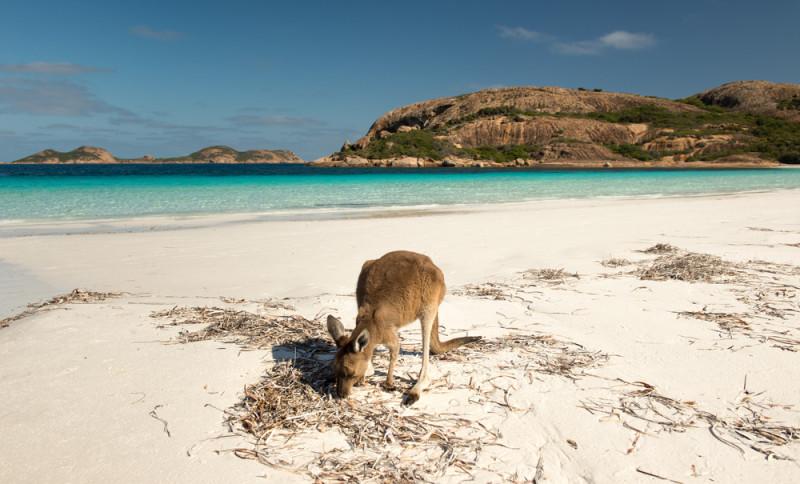 playa-australia-canguro