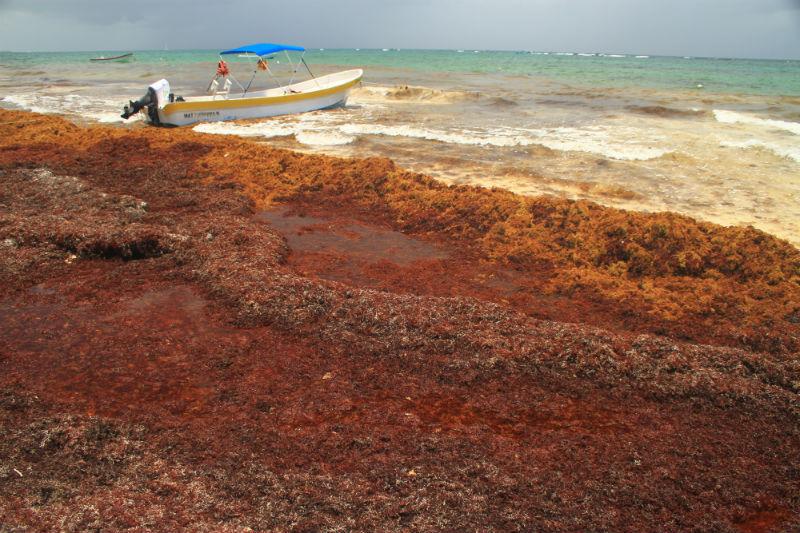 algas-en-playa-de-tulum