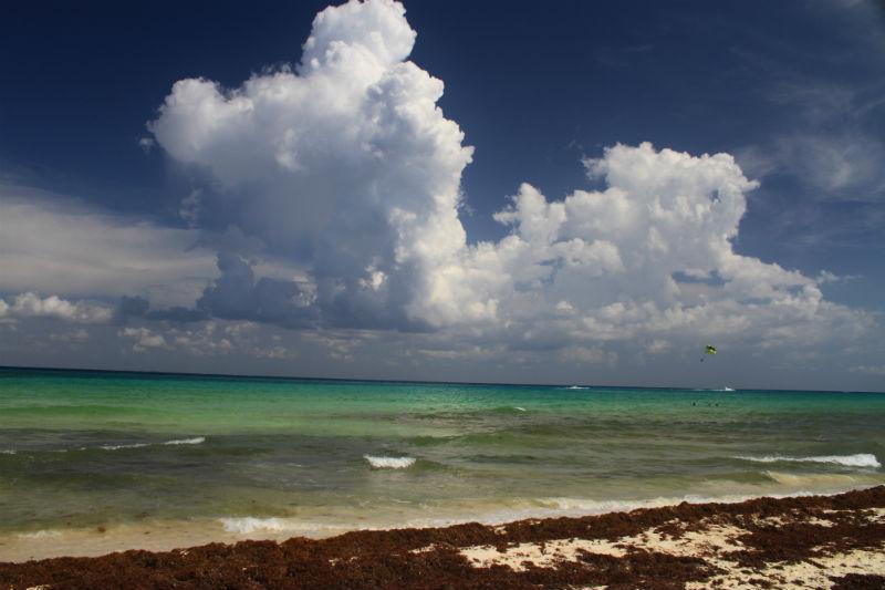 algas-en-playa-del-carmen