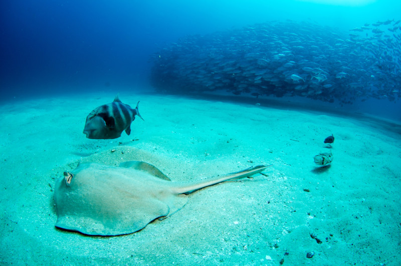 submarinismo-cabo-pulmo