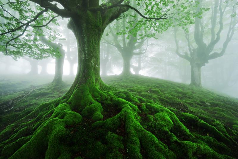 Un bosque que parece encantado en el pa s vasco hayedo de - Arboles pais vasco ...