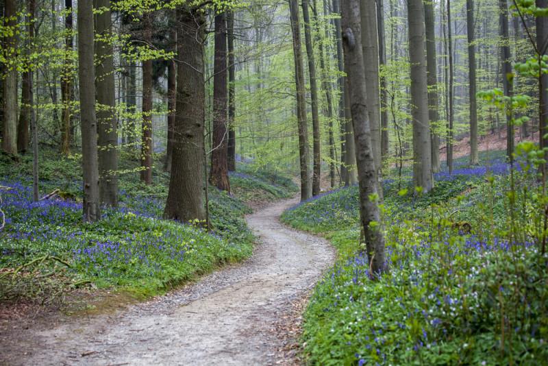 bosque-hallerbos-belgica (2)