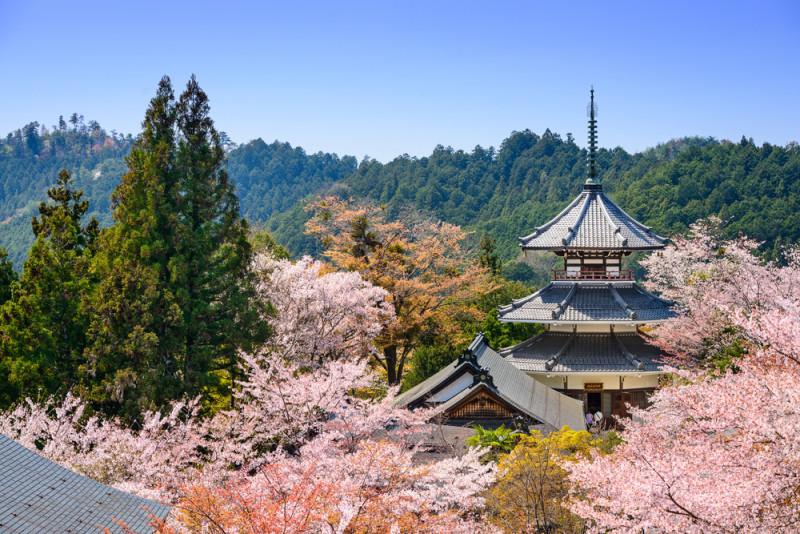 yoshino-japon (2)