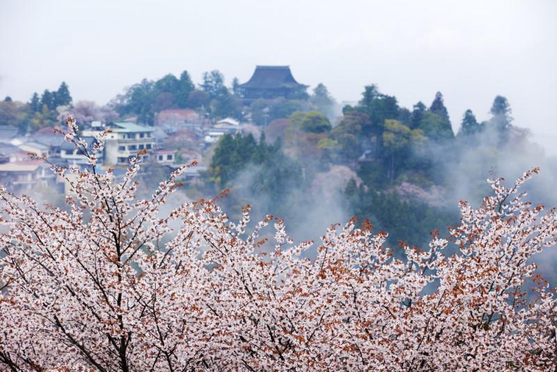 yoshino-japon (4)