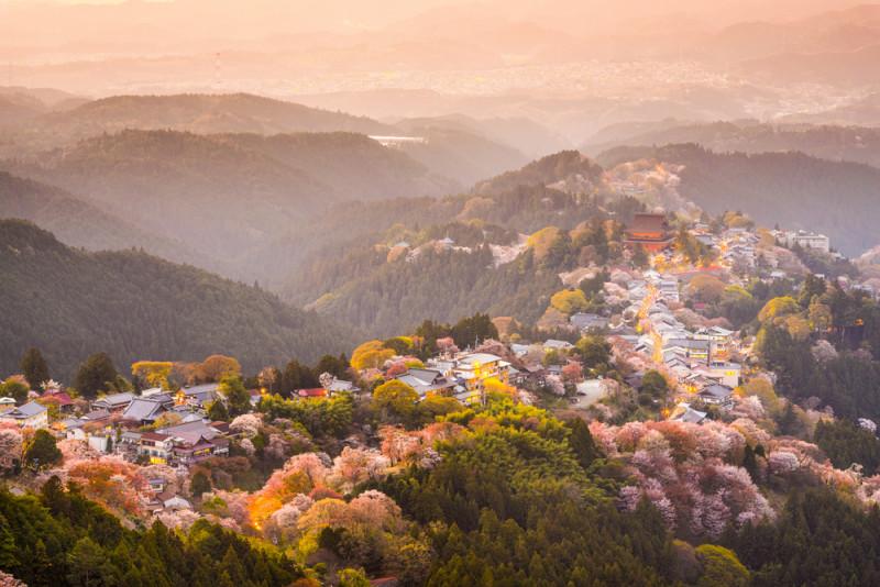 yoshino-japon (5)