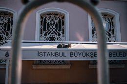 Fotos de gatos en Estambul